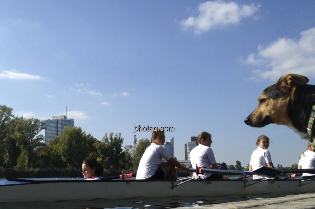 Hund, Wasser, Alte Donau (28.09.2013)
