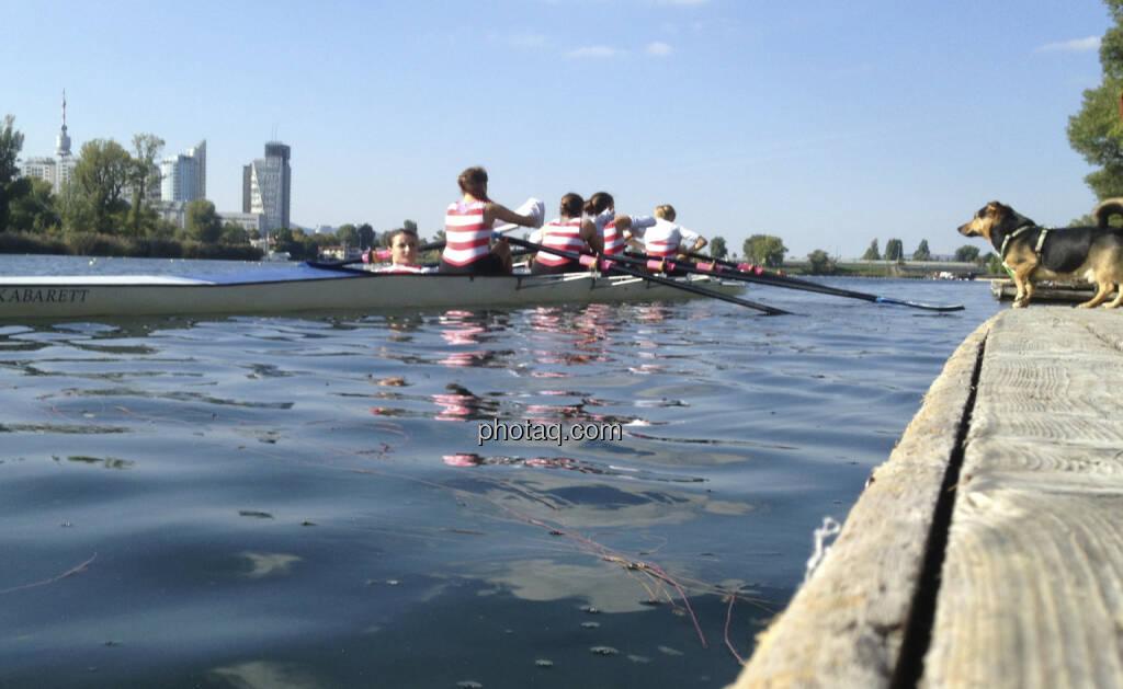 Hund, Wasser, Alte Donau, Rudern (28.09.2013)