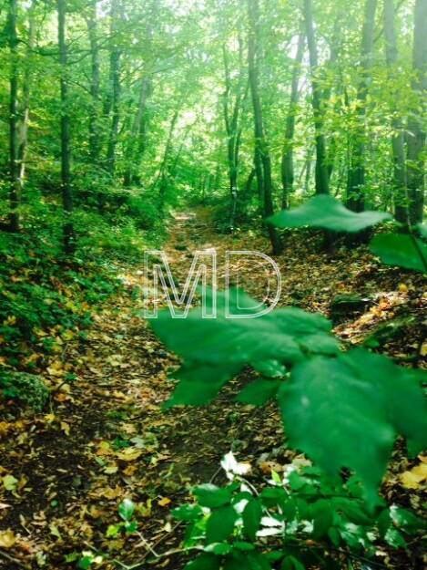 Waldweg, © Martina Draper (08.10.2013)