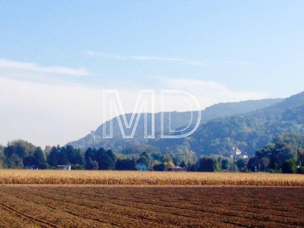 Feld, Burg Greifenstein, © Martina Draper (08.10.2013)