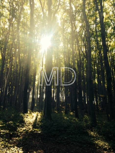Sonne, Baumstämme, © Martina Draper (08.10.2013)