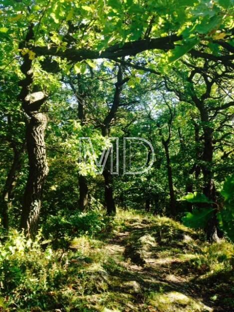 Eichen, Wald, © Martina Draper (08.10.2013)