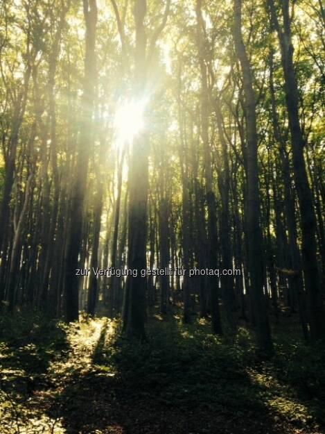 Sonnenstrahlen durch Bäume, © Martina Draper / Diverse (16.10.2013)