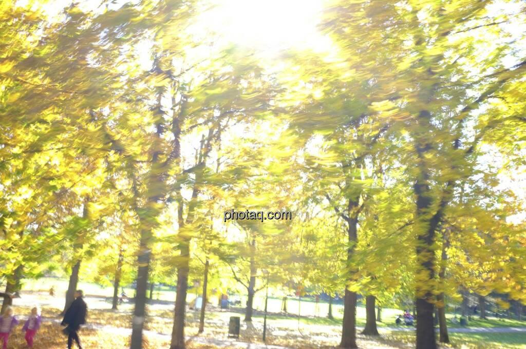 Sonnenlicht, Blätter, Herbstlaub, © Martina Draper / Diverse (19.10.2013)