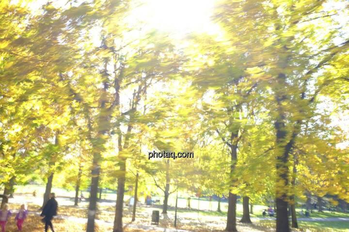 Sonnenlicht, Blätter, Herbstlaub