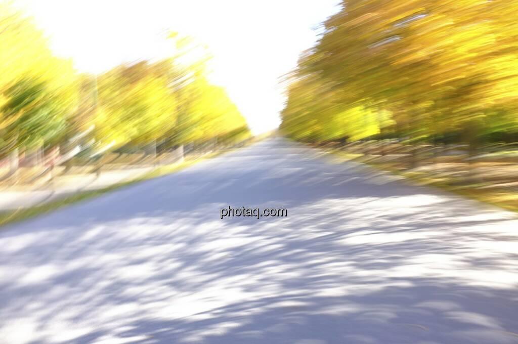 Hauptallee Prater, Speed, Herbstlaub, © Martina Draper / Diverse (19.10.2013)
