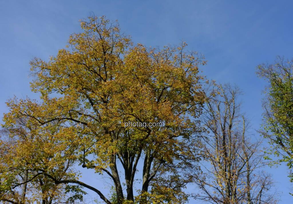 Herbst, Bäume, © Martina Draper / Diverse (24.10.2013)