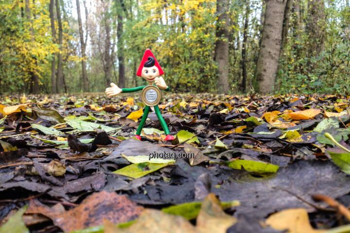 Sparefroh im Wald, Herbst, Laub