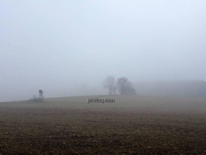 Feld, Bäume, Nebel