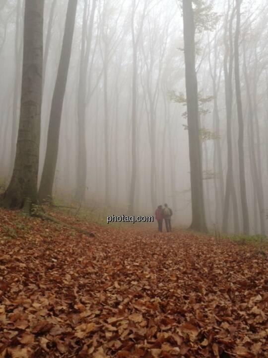 Wald, Nebel, Spaziergänger