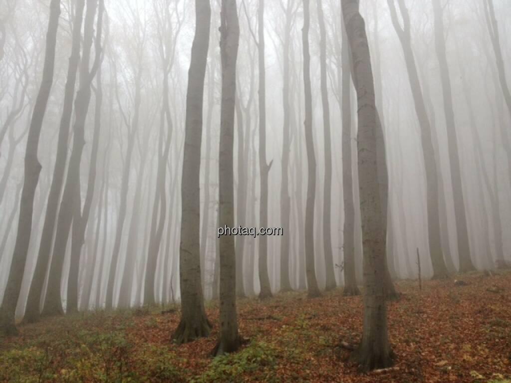Wald, Nebel, © Martina Draper / Diverse (02.11.2013)