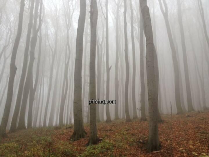 Wald, Nebel