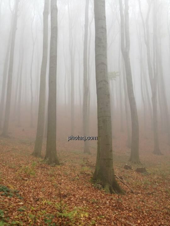 Herbst, Nebel, Baumstämme