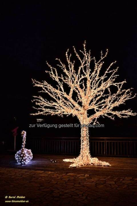 Baum, Lichter im Advent, www.fotomoldan.at
