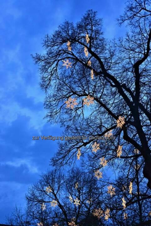 Baum, Rathausplatz, Wien, Lichter im Advent, www.fotomoldan.at