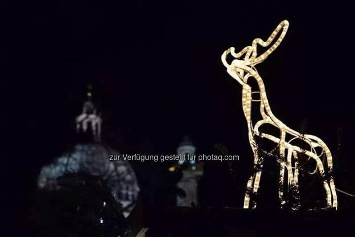 Rentier, Karlskirche, Wien, Lichter im Advent, www.fotomoldan.at