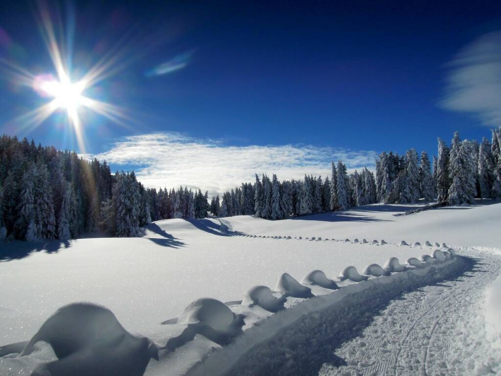 Schnee, Weg, Bäume, Sonne, Vigljoch, Südtirol, © Peter Sitte (27.12.2013)