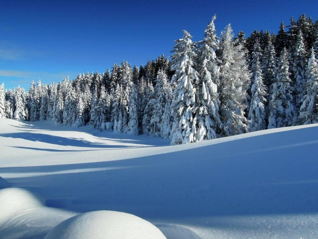 Schnee, Bäume, Vigljoch, Südtirol, © Peter Sitte (27.12.2013)