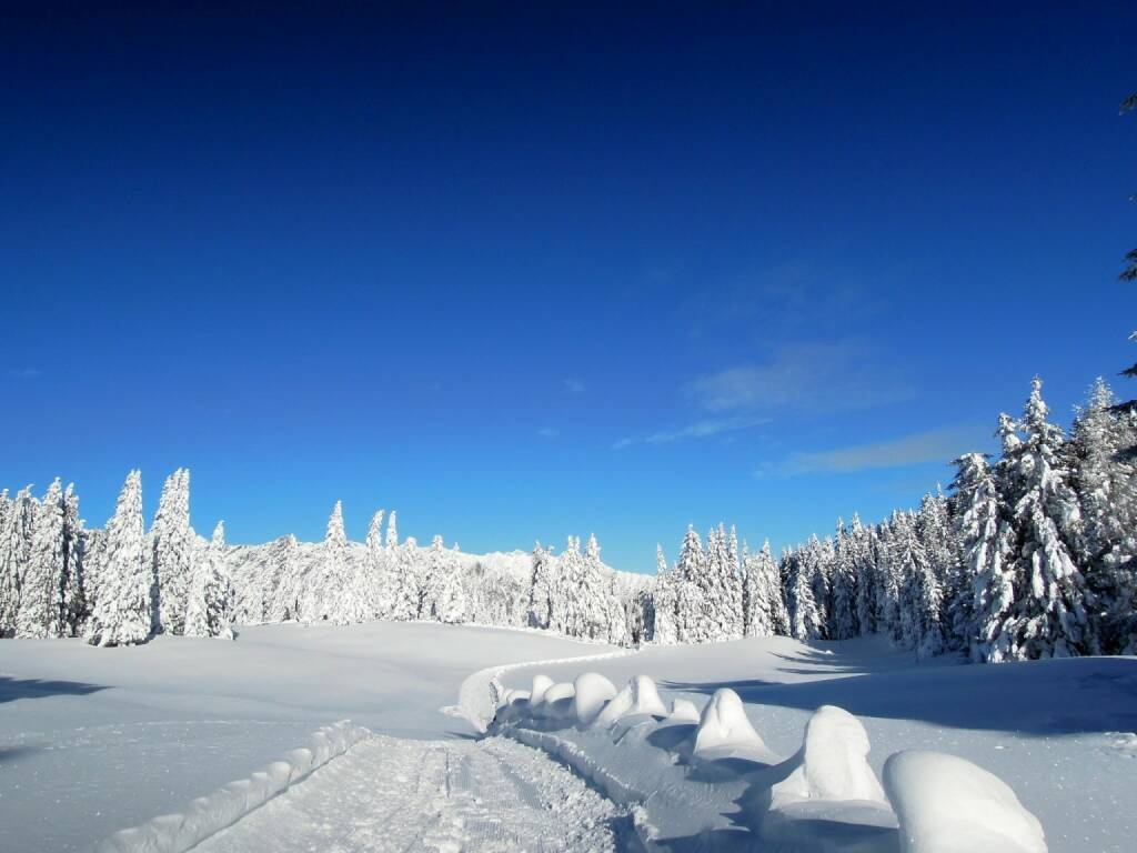 Bäume, Schnee, Weg, Vigljoch, Südtirol, © Peter Sitte (27.12.2013)