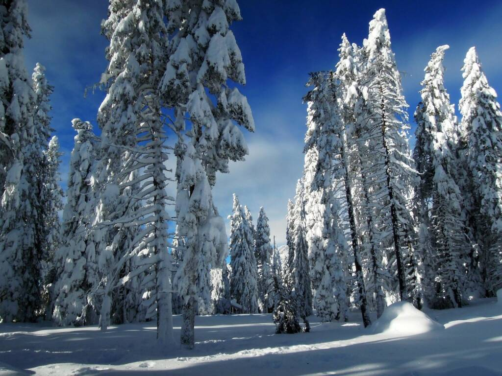 Bäume, Schnee, Vigljoch, Südtirol, © Peter Sitte (27.12.2013)
