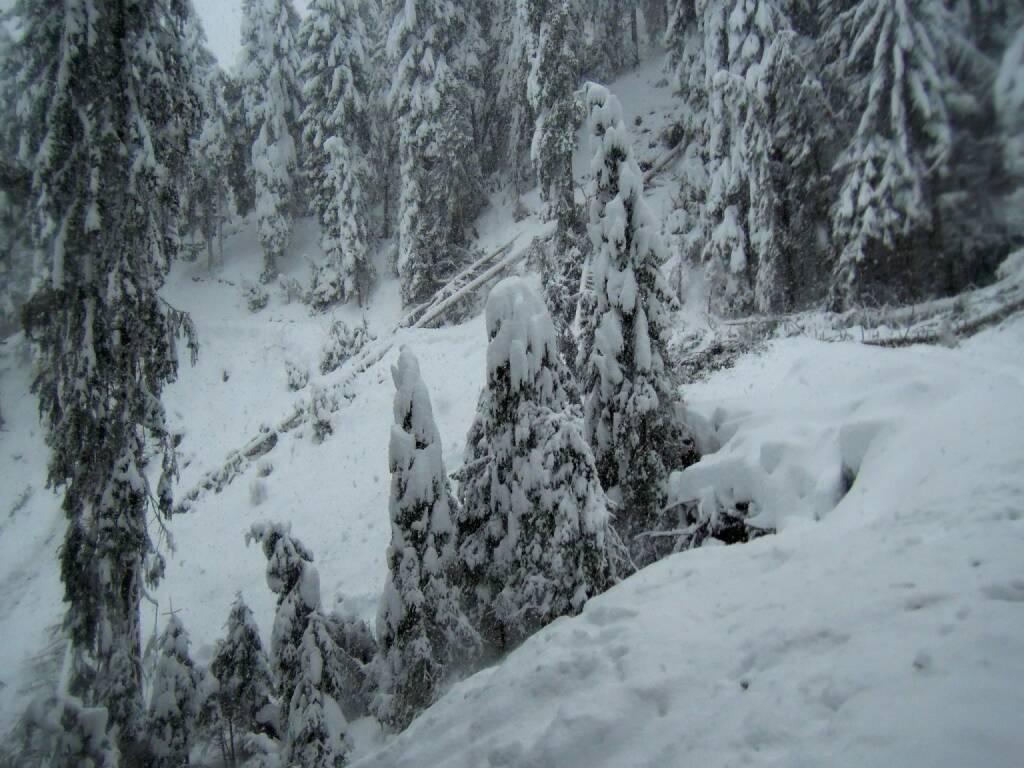 Bäume, Schnee, Nebel, Vigljoch, Südtirol, © Peter Sitte (29.12.2013)