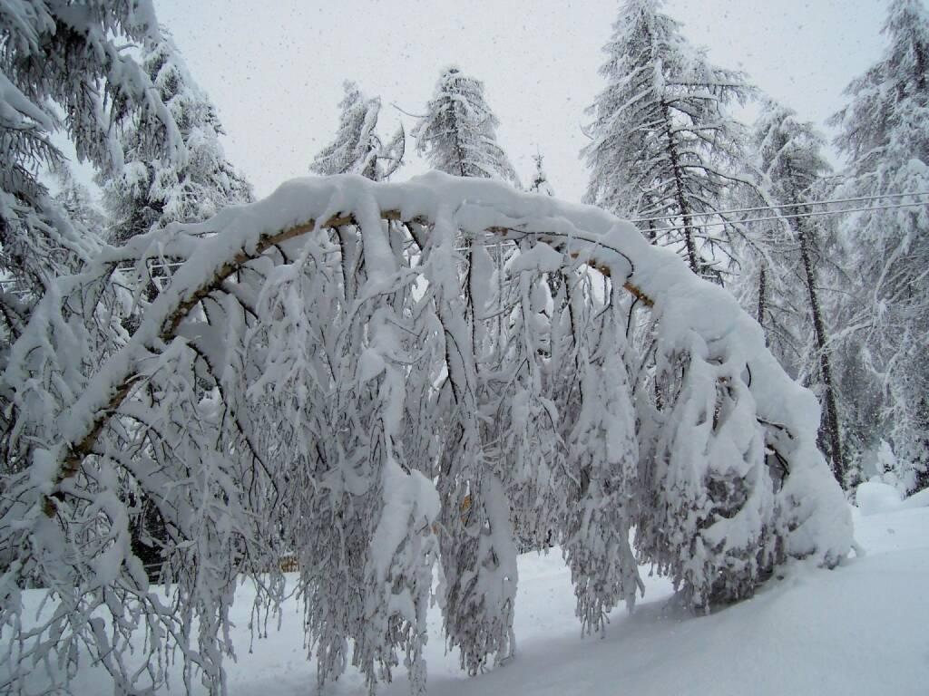 Baum, Schnee, geknickt, Vigljoch, Südtirol, © Peter Sitte (29.12.2013)