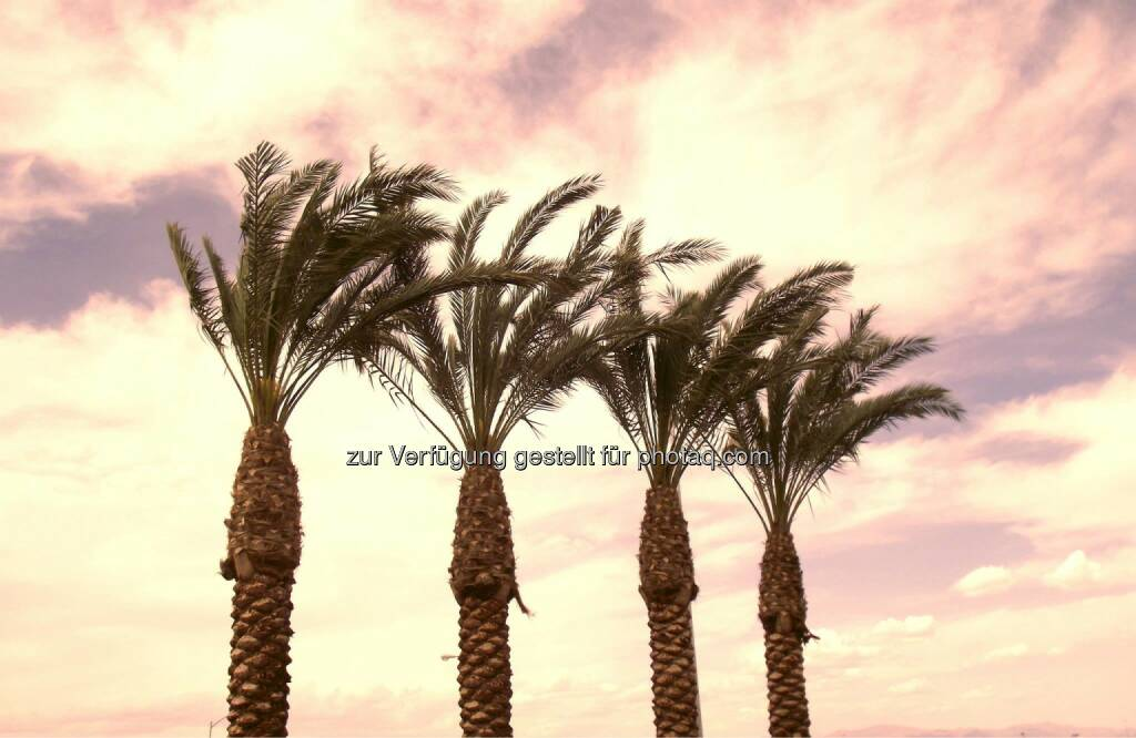 Palm Trees at Sunset, Palmen (2011) , © Dietmar Scherf (17.02.2014)