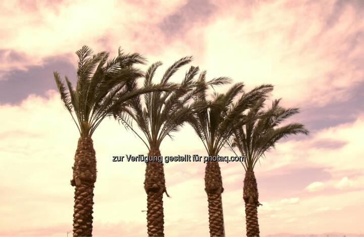 Palm Trees at Sunset, Palmen (2011)