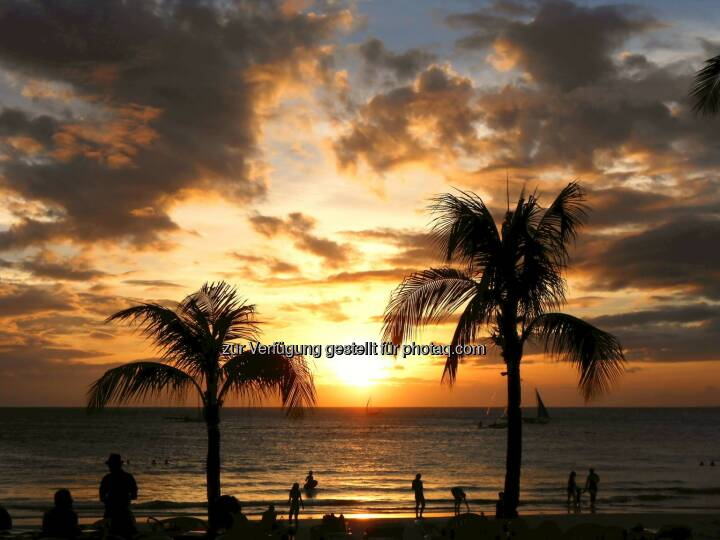 Palm Tree Sunset (2014)