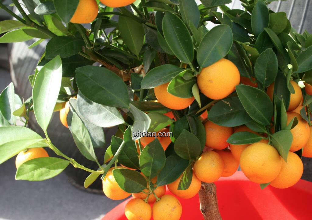Orangen (12.04.2014)