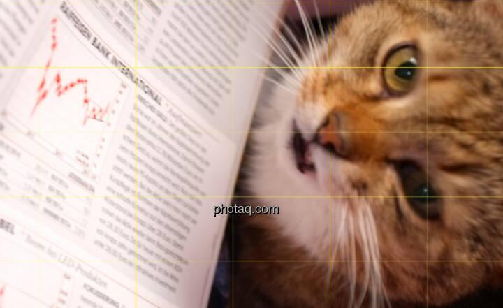 Katzenbild Börse Raiffeisen RBI