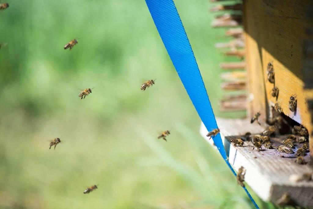 Bienen in Mauer bei Wien; Anreise, Event, © Eizinger (16.04.2014)