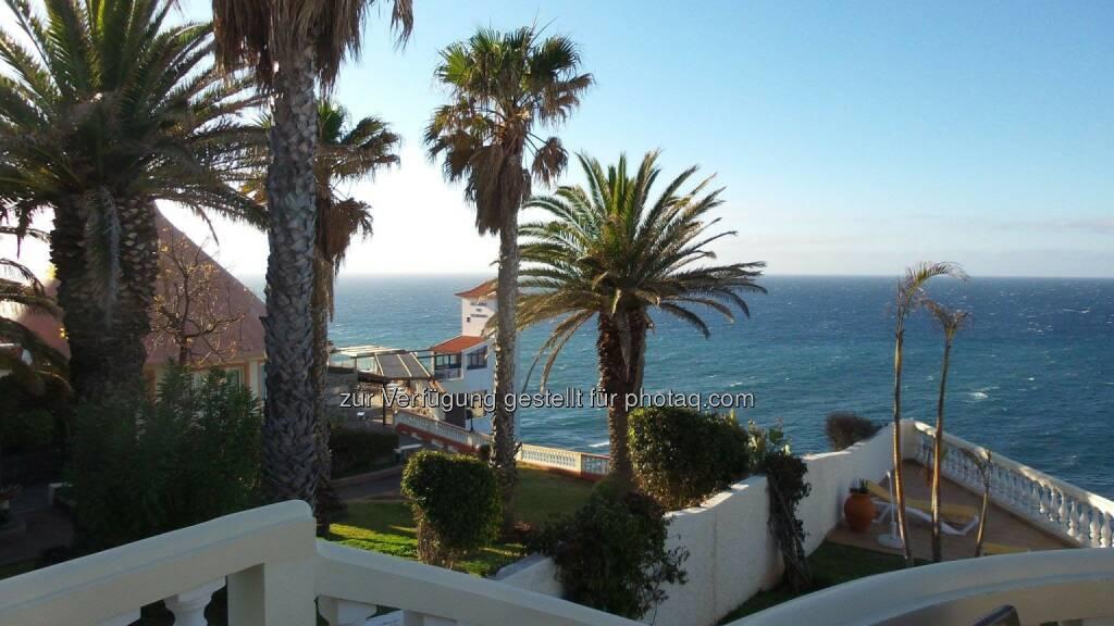 Madeira Palmen (27.04.2014)