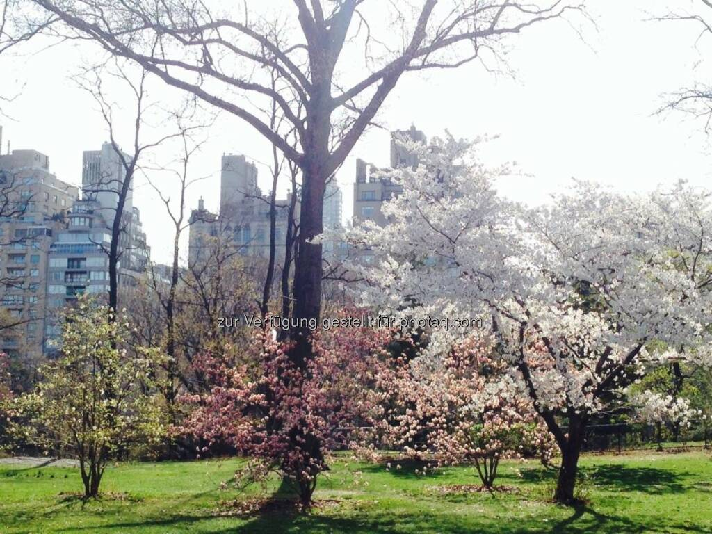 New York Central Park Frühling, © Sylvia Dellantonio (01.05.2014)
