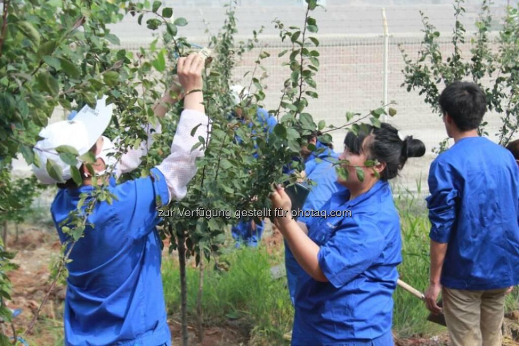 """RHI: Letzte Woche wurde es ein Stück grüner im Werk Dashiqiao. Nach dem Motto """"Plant  Green, Love Dashiqiao"""" fand eine gemeinsame Baumpflanzaktion mit rund 200 Mitarbeiterinnen und Mitarbeitern am Standort statt.  Source: http://facebook.com/133039406833055  (12.06.2014)"""