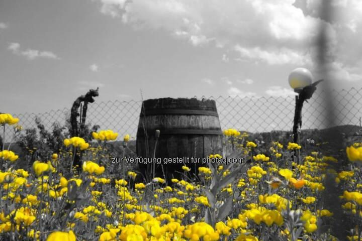 Bauern, Blumen, gelb