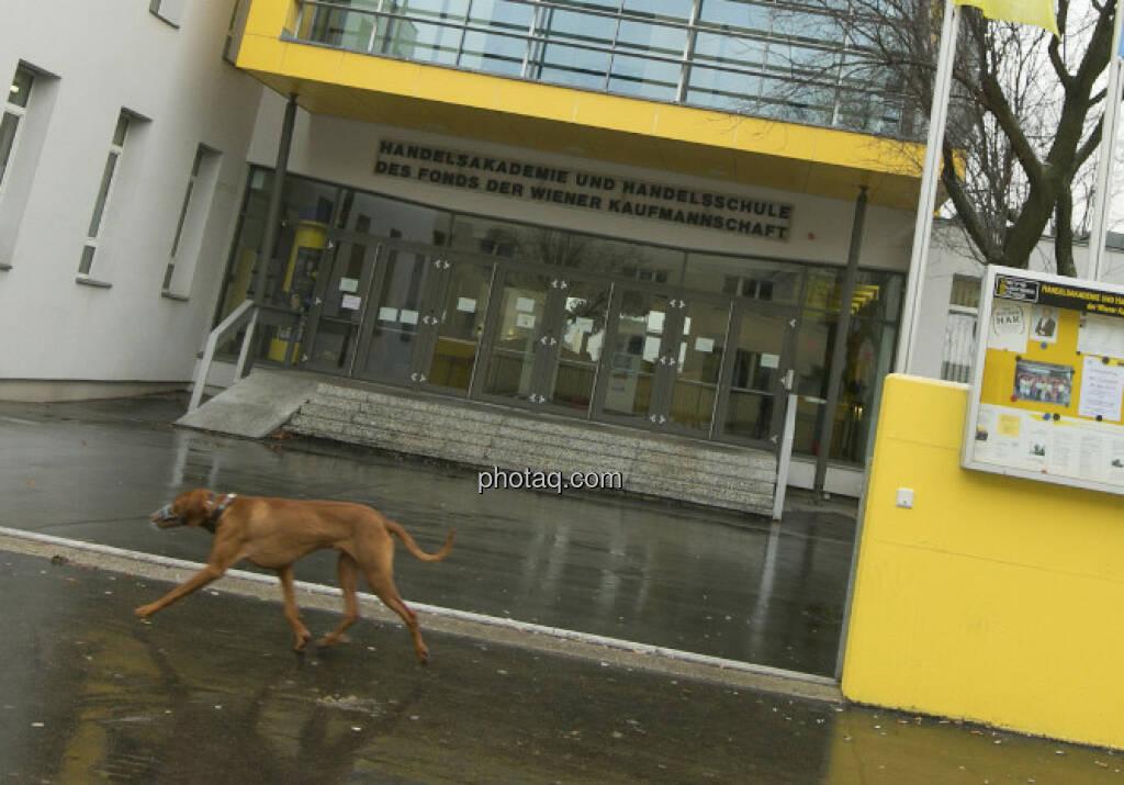 Vienna Business School mit Hund davor, 1210 Wien, © Martina Draper/finanzmarktfoto.at (06.01.2013)