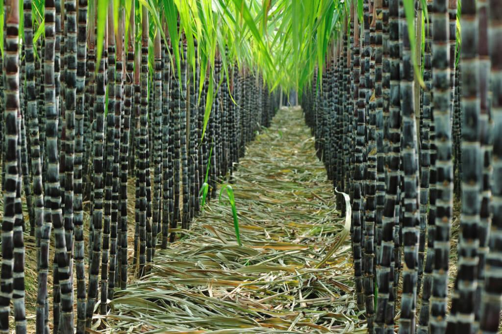 Zuckerrohr, http://www.shutterstock.com/de/pic-125618474/stock-photo-sugarcane-field.html , © (www.shutterstock.com) (01.07.2014)