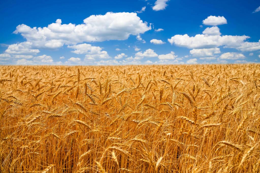Weizen, Weizenfeld, http://www.shutterstock.com/de/pic-200621507/stock-photo-wheat-field.html , © (www.shutterstock.com) (01.07.2014)