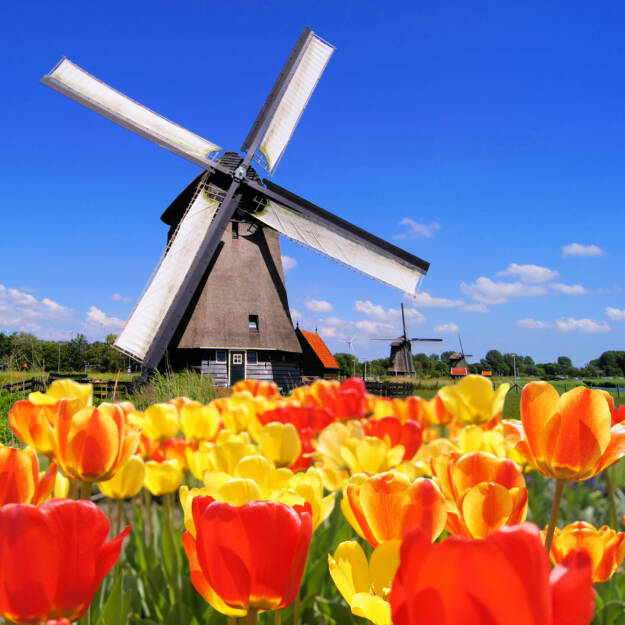 Windmühle, Tulpen, gegen, Holland, Niederlande, NL, http://www.shutterstock.com/de/pic-112674380/stock-photo-traditional-dutch-windmills-with-vibrant-tulips-in-the-foreground-the-netherlands.html (Bild: shutterstock.com) (13.07.2014)