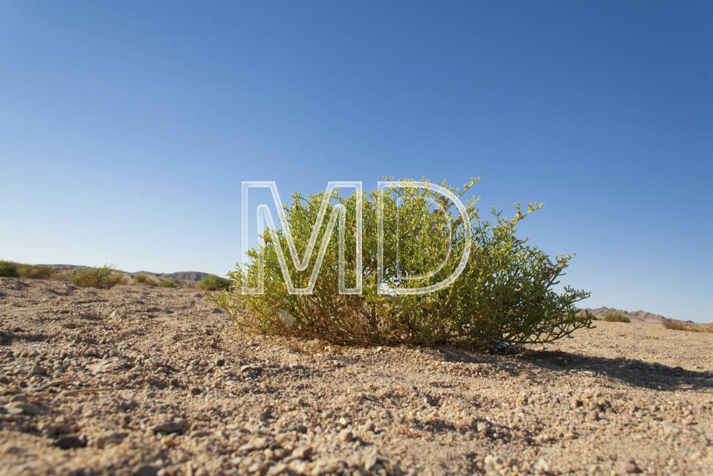 Wüste, Marsa Alam, Ägypten, © Martina Draper (13.01.2013)