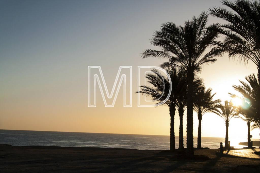 Palmen, Marsa Alam, Ägypten, © Martina Draper (13.01.2013)