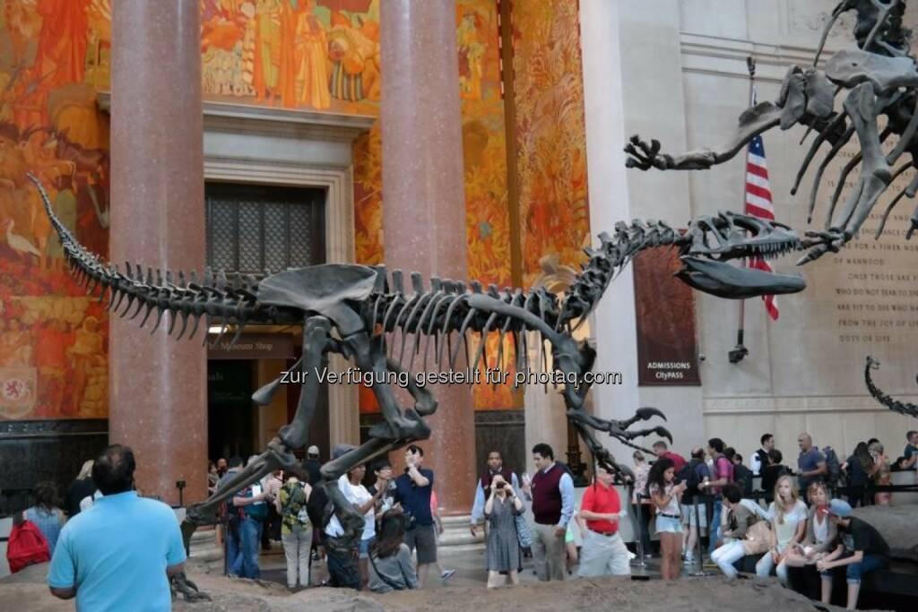 Skelett Dinosaurier, © Gerald Pollak (17.08.2014)