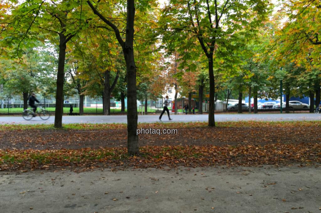 Hauptallee, Herbst, Sport (14.10.2014)