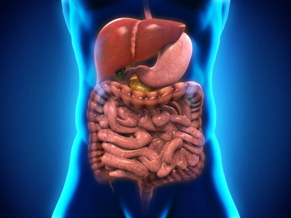 Darm, Innereien, Eingeweide, Verdauung, http://www.shutterstock.com/de/pic-193293677/stock-photo-human-digestive-system.html, © www.shutterstock.com (06.11.2014)