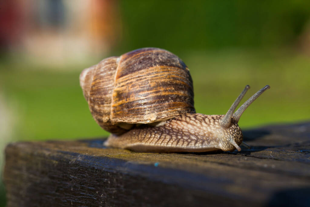 Schnecke, langsam, http://www.shutterstock.com/de/pic-144765469/stock-photo-snail-on-the-table.html, © www.shutterstock.com (19.06.2018)