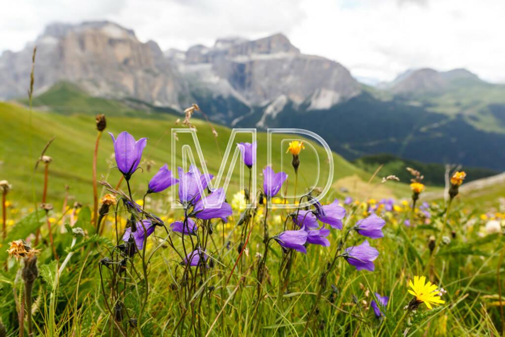 Alm, Almwiese, Blumenwiese, Alpen, Blumen, Boden, Erdboden, http://www.shutterstock.com/de/pic-210740737/stock-photo-flowers-on-meadows-above-val-di-fassa-dolomites-italy.html, © teilweise www.shutterstock.com (03.12.2014)