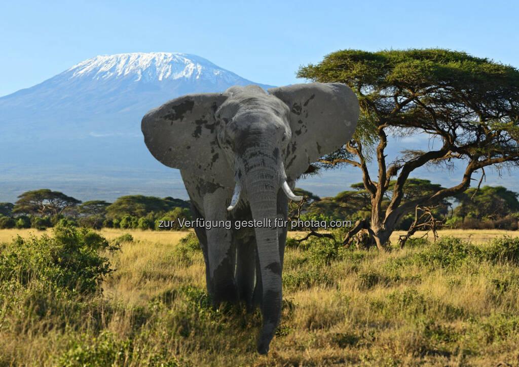 Kilimanjaro, Kenia, Afrika, Elefant, Berg, Steppe, http://www.shutterstock.com/de/pic-200161715/stock-photo-kilimanjaro-elephants-in-amboseli-national-park-kenya.html, © teilweise www.shutterstock.com (10.12.2014)