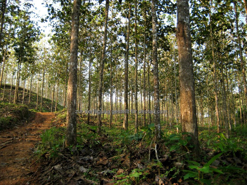 Teak-Plantage 10 Jahre (Bild: Teak Holz International), © Aussender (15.12.2014)