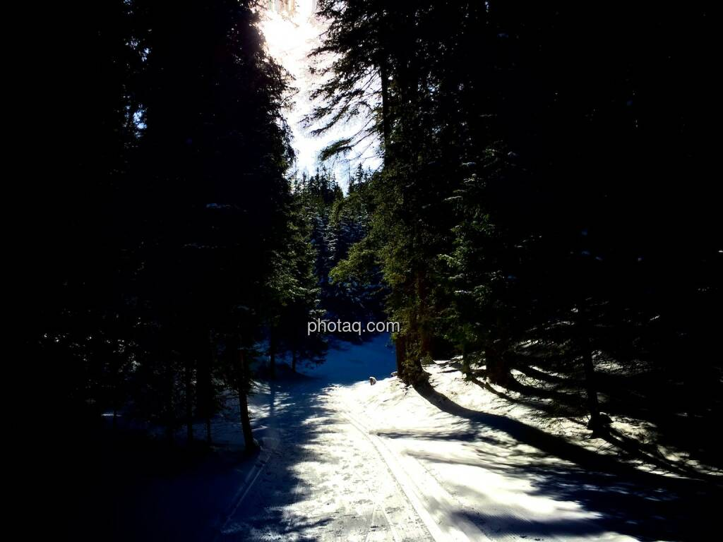 Loipe, Wald (04.02.2015)